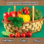 Панкратова А. — Семейство пасленовых. Технология выращивания (2008 ) fb2