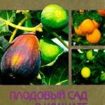 Блейз О. С. — Плодовый сад в комнате (2002) djvu