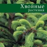 Лилиан Плотникова — Хвойные растения (2006) rtf, fb2