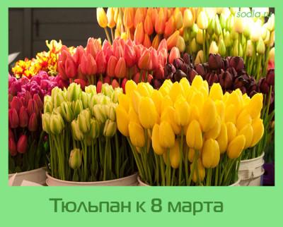 тюльпаны к 8 марта 2016