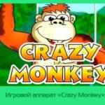 Игровой аппарат «Crazy Monkey» в казино