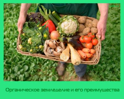 Органическое земледелие и его преимущества