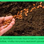 Где приобрести и как подготовить семена бобов, чтобы получить высокий урожай