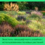 Экостиль ландшафтного дизайна с использованием полевых растений