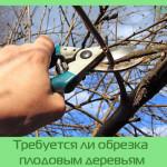 Требуется ли обрезка плодовым деревьям