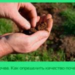 Почва. Как определить качество почвы?
