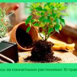 Уход за комнатными растениями: 10 правил