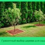 Грамотный выбор дерева для сада