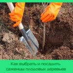 Как выбрать и посадить саженцы плодовых деревьев